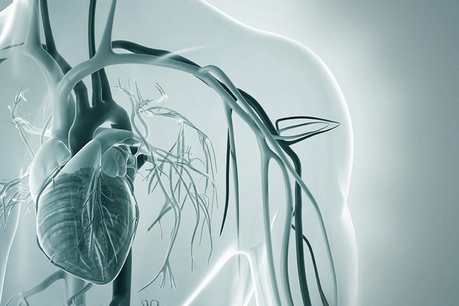 Blutgefäße Herz Illustration Pulswellenanalyse